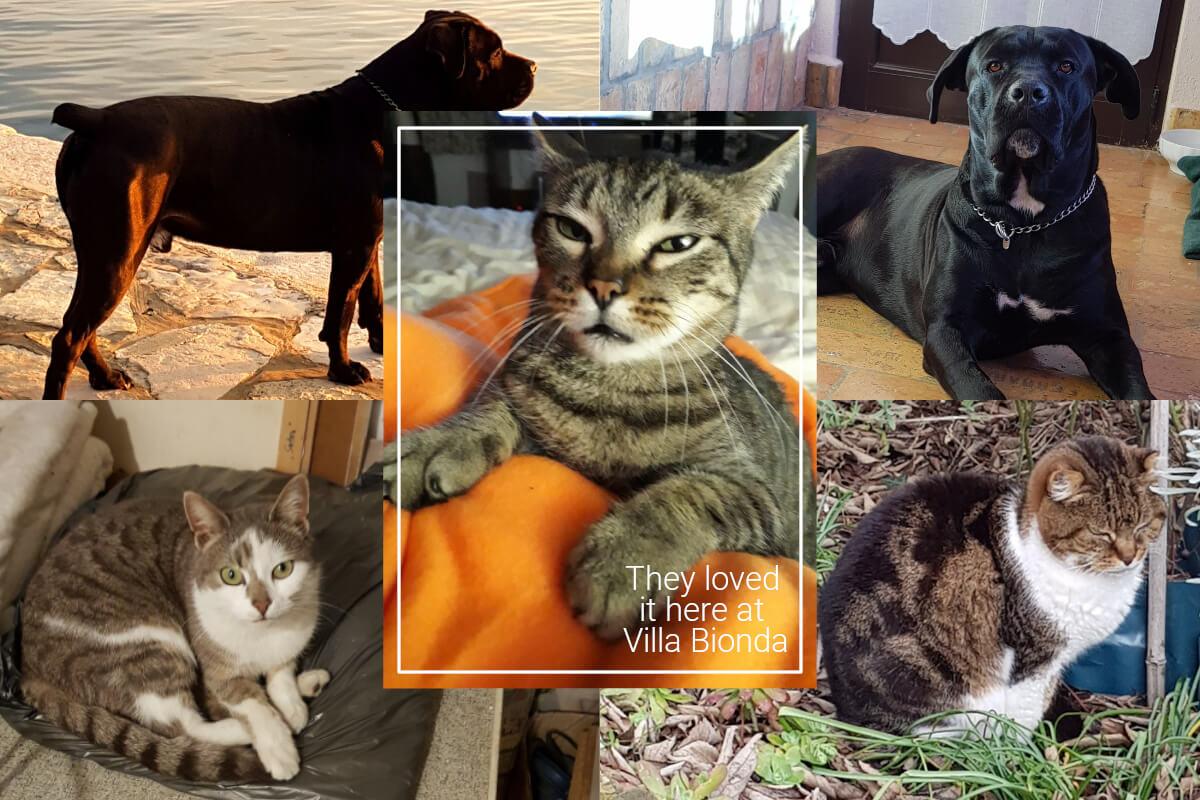 Finally, find pet-friendly accommodation